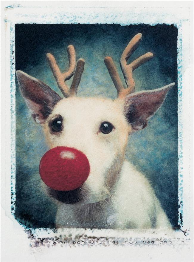 cachorro-cartão-de-natal-13