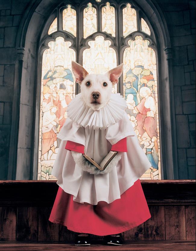cachorro-cartão-de-natal-9