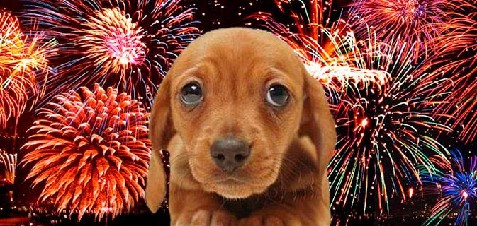 cachorros-fogos-artificio
