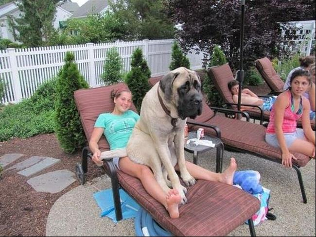 cachorros-gigantes-10