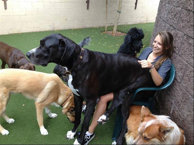 cachorros-gigantes-13