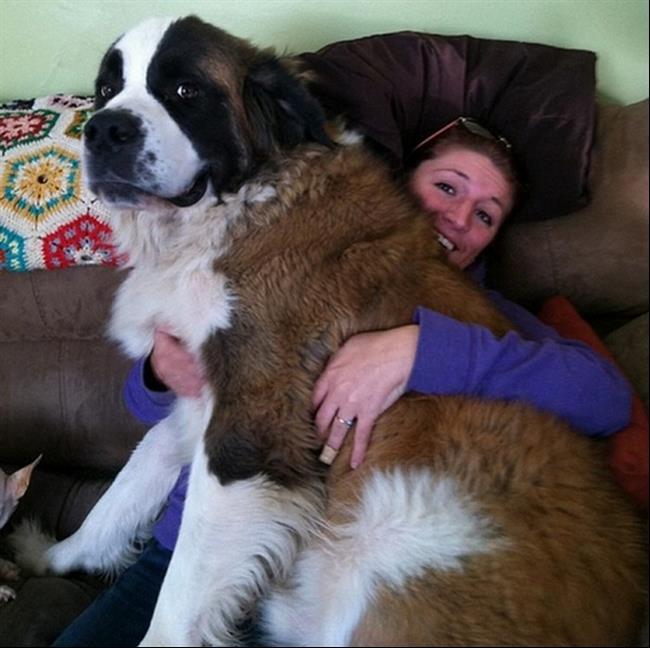 cachorros-gigantes-14