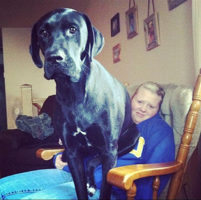 cachorros-gigantes-15