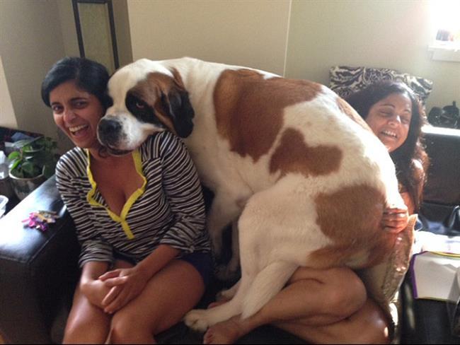 cachorros-gigantes-16