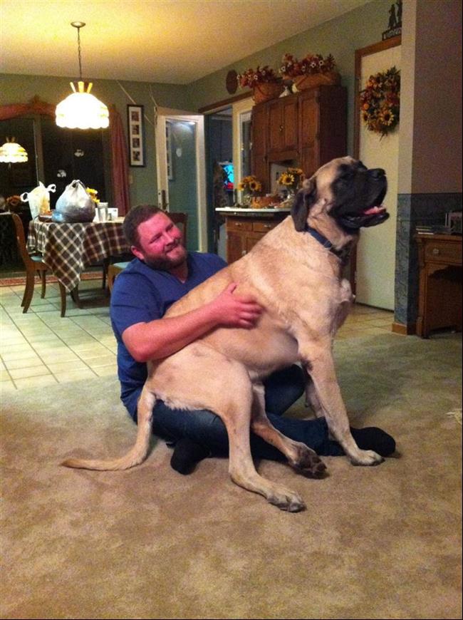 cachorros-gigantes-17