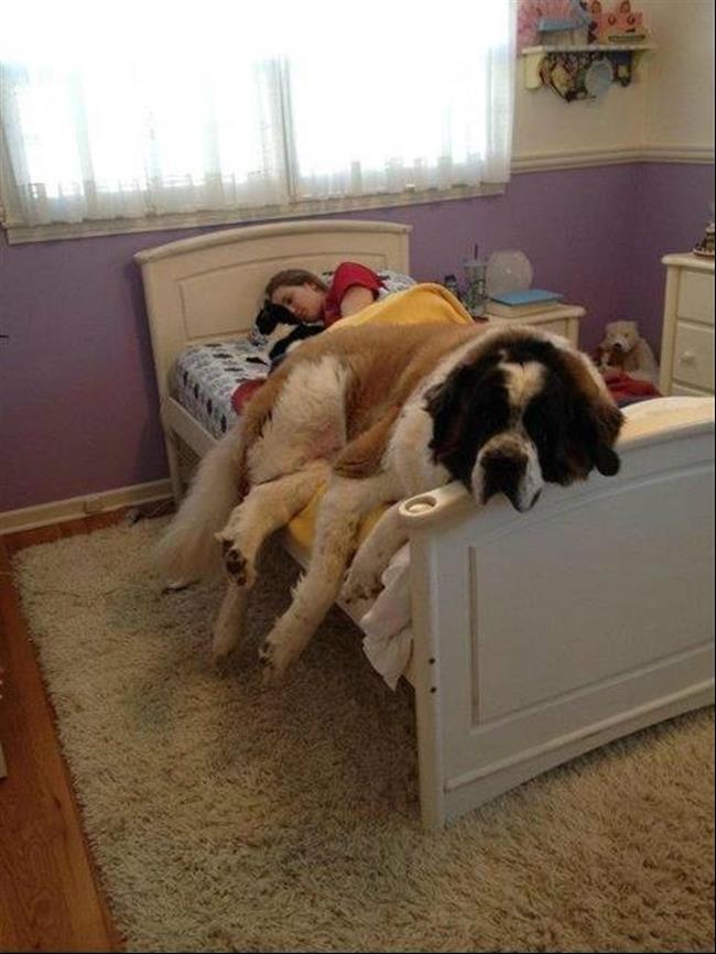 cachorros-gigantes-18
