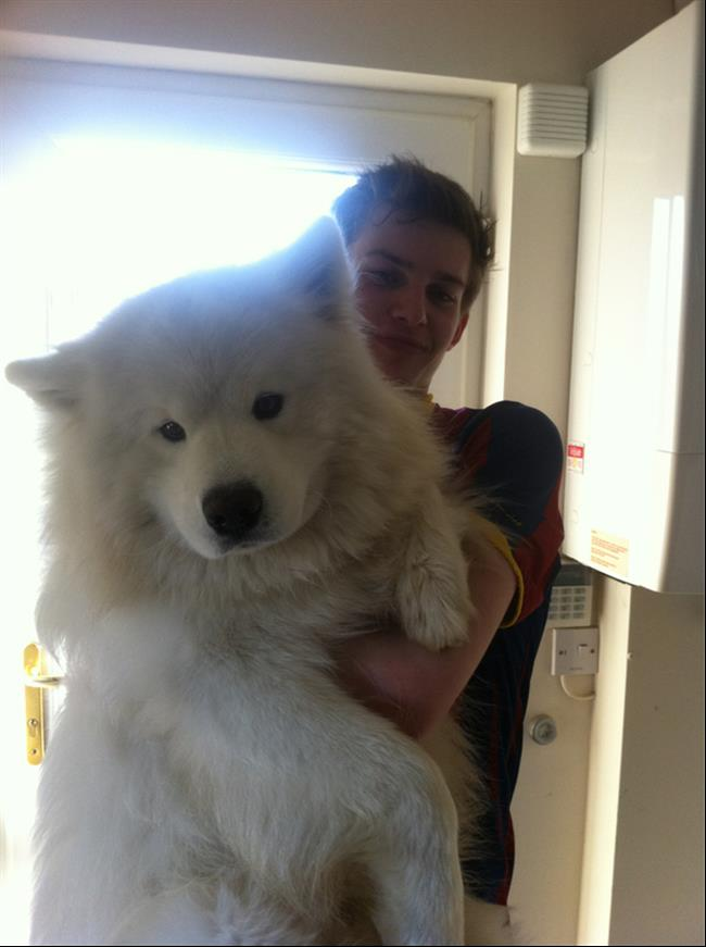 cachorros-gigantes-19