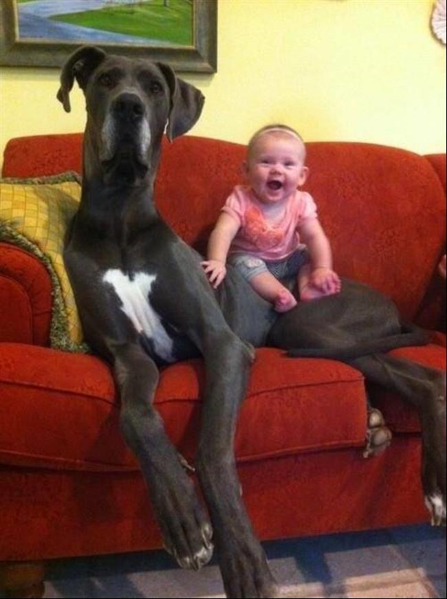 cachorros-gigantes-2