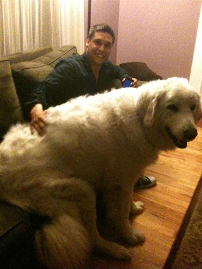 cachorros-gigantes-22