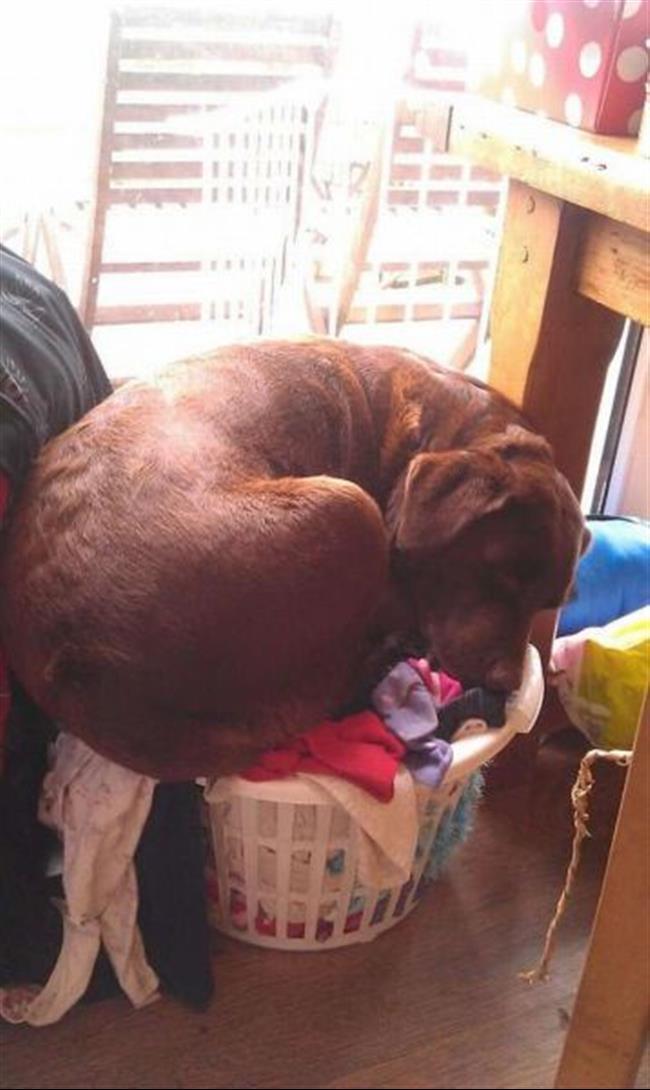 cachorros-gigantes-3