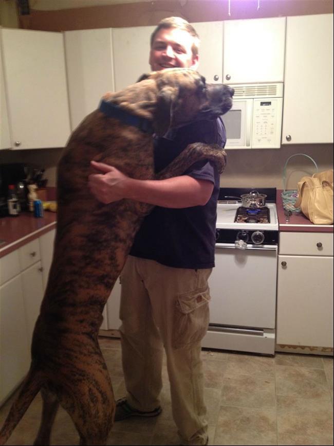 cachorros-gigantes-5