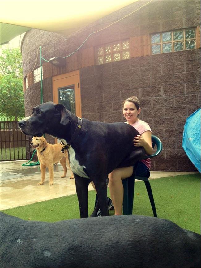 cachorros-gigantes-9