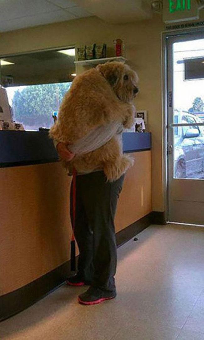 cachorros-gigantes-x