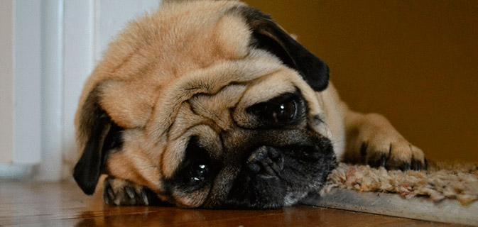 camera-reacao-cachorro-sozinho