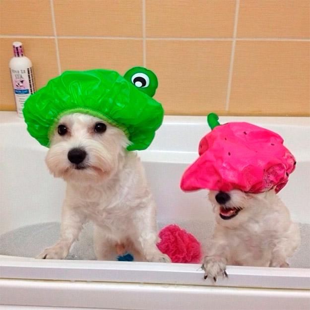 4 – Coloque uma touca de banho na cabeça do seu cachorro para impedir que o  shampoo caia nos olhos 8ba044de0e4