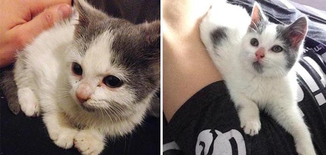 Antes e depois | 16 Fotos mostram como a adoção pode fazer bem aos cães e gatos abandonados