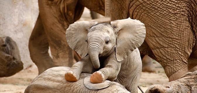 Afastem se gatos beb s elefantes s o os novos animais - Fotos de elefantes bebes ...