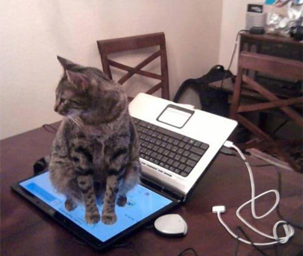 logica-dos-gatos-7
