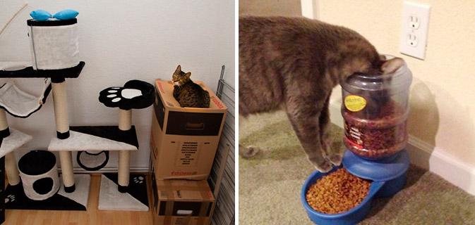 A lógica dos gatos explicada em 23 exemplos hilários. Sério!
