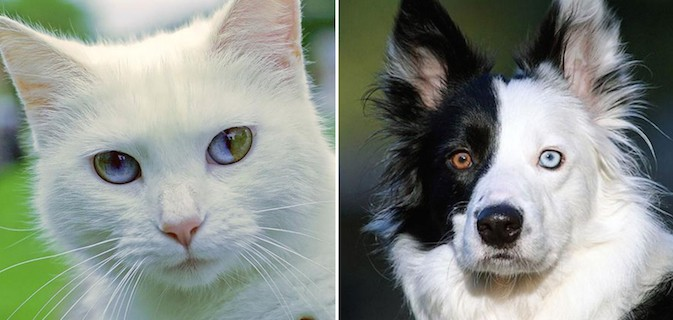 animais-olhos-diferentes_dest