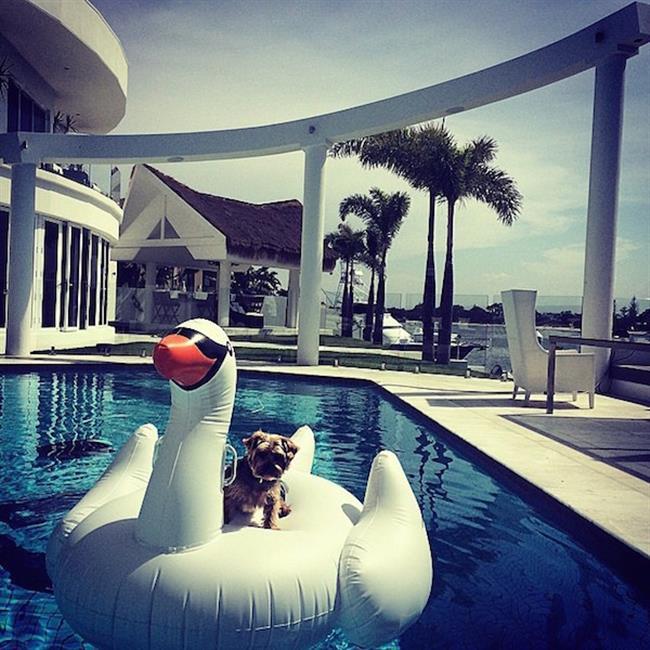 cachorros-ricos-15