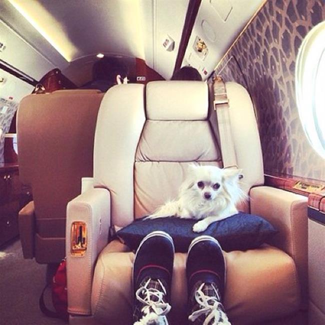 cachorros-ricos-20
