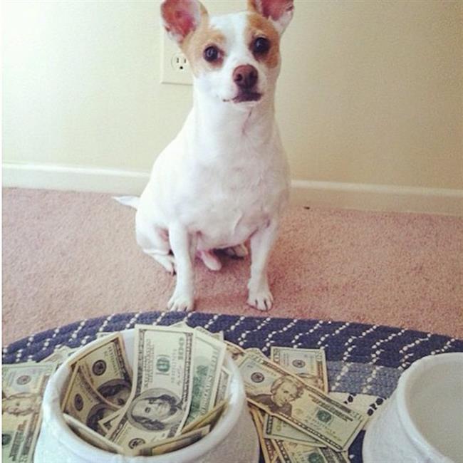 cachorros-ricos-5