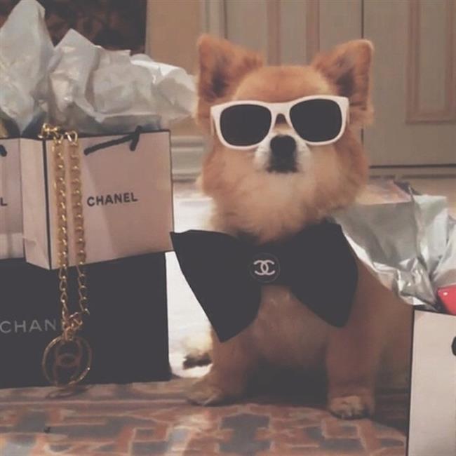 cachorros-ricos-7
