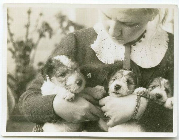 cachorros-vintage-19