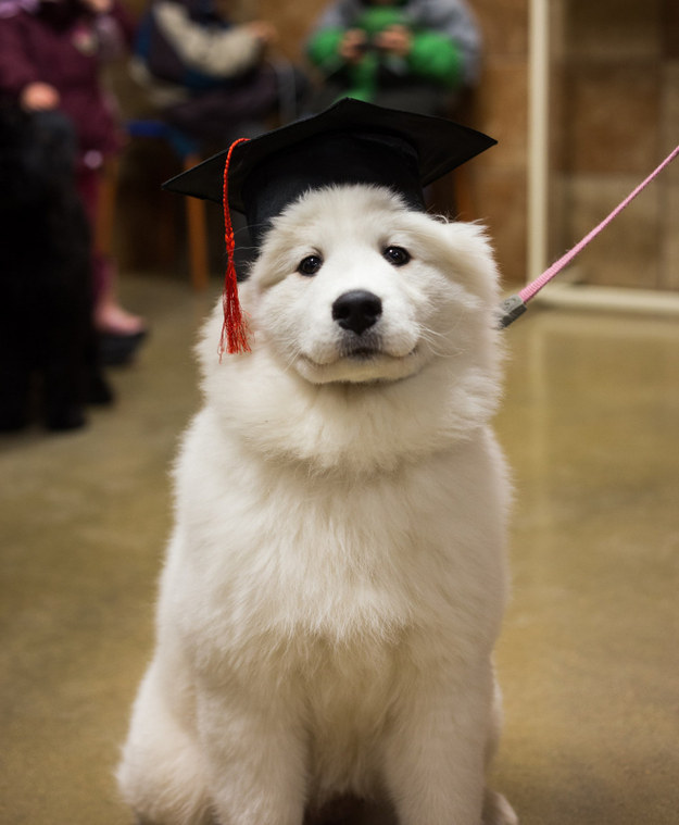 filhotes-diplomas-1