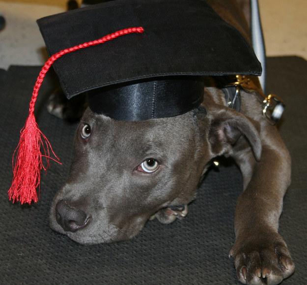 filhotes-diplomas-15