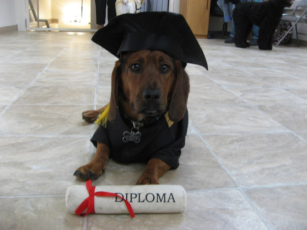 filhotes-diplomas-16