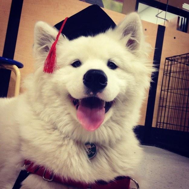 filhotes-diplomas-8