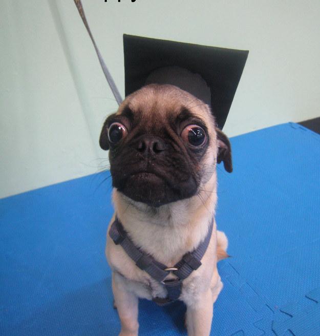 filhotes-diplomas-9