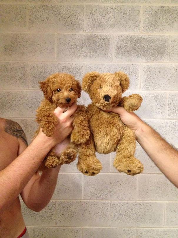 filhotes-parecem-com-ursos-de-pelúcia-5
