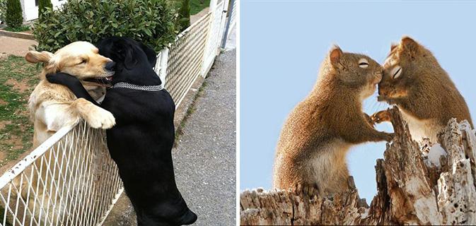 20 Lindos casais de animais provando que no reino animal também existe amor