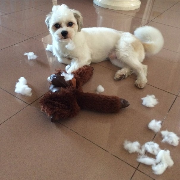 cachorro-envergonhado-17