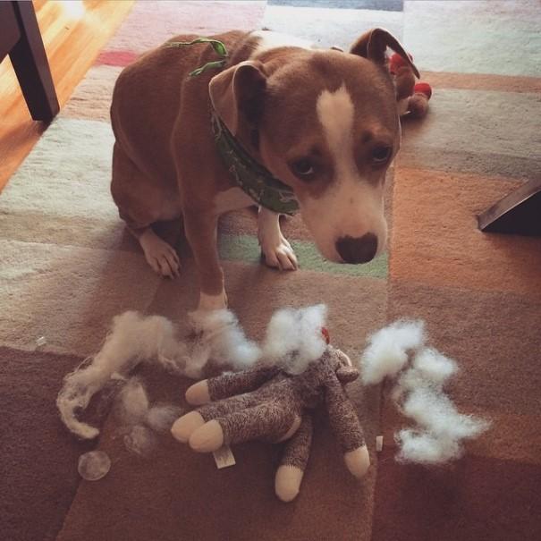 cachorro-envergonhado-2