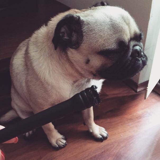 cachorro-envergonhado-21