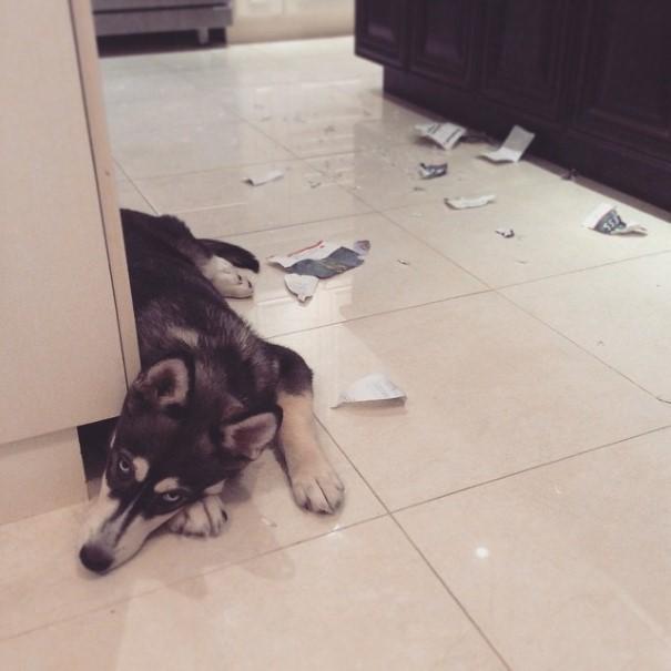 cachorro-envergonhado-25