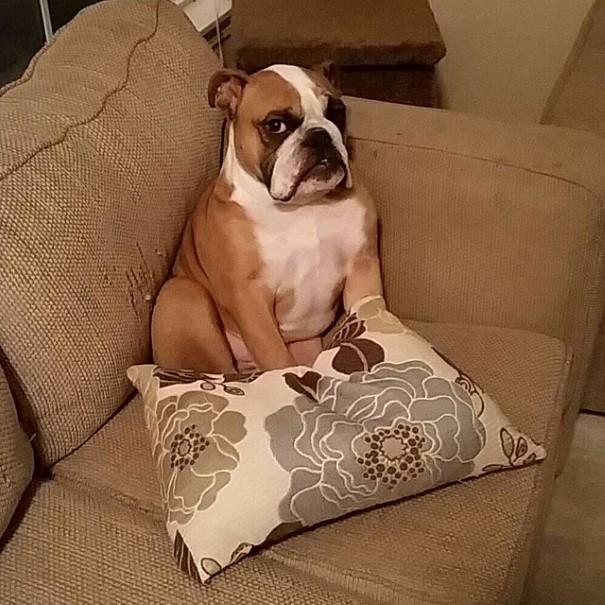 cachorro-envergonhado-9