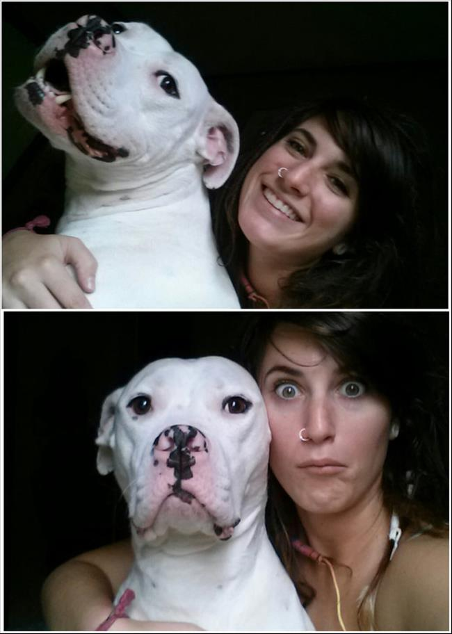 razões-não-ter-pitbull-8