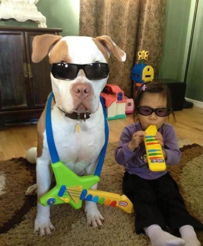 razões-não-ter-pitbull-9.1