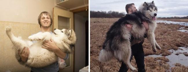 antes-e-depois-cachorros-1.2