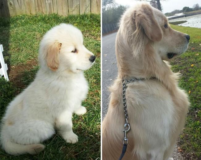 antes-e-depois-cachorros-10