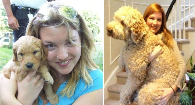 antes-e-depois-cachorros-12