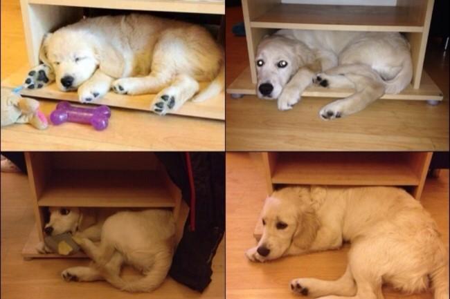antes-e-depois-cachorros-13