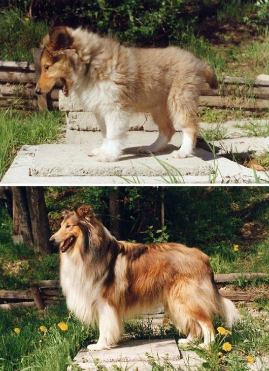 antes-e-depois-cachorros-14
