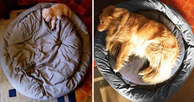 antes-e-depois-cachorros-2