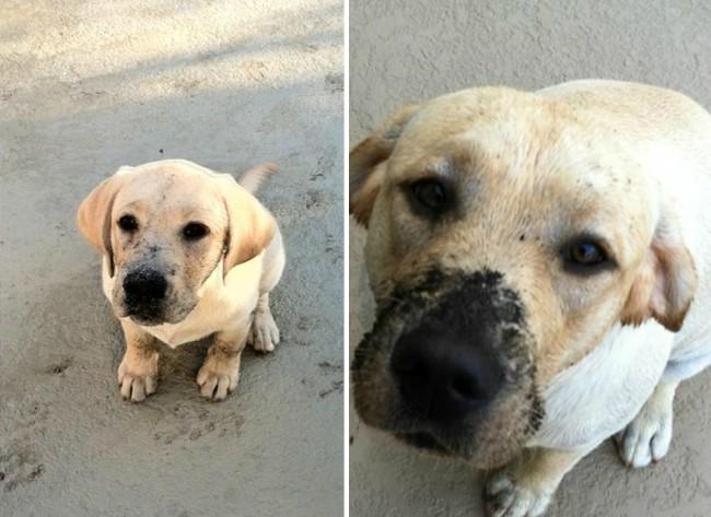 antes-e-depois-cachorros-24